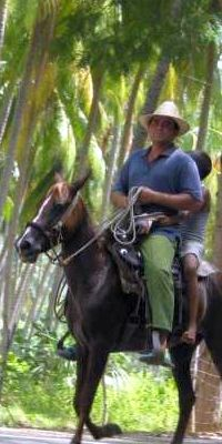 palms and horses in Cuba