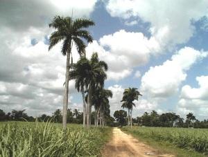 Landschaft in Kuba