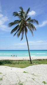 Palms and beaches of Cuba
