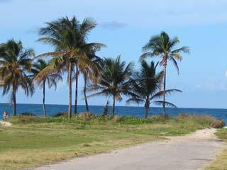 Palmen und Meer in Kuba