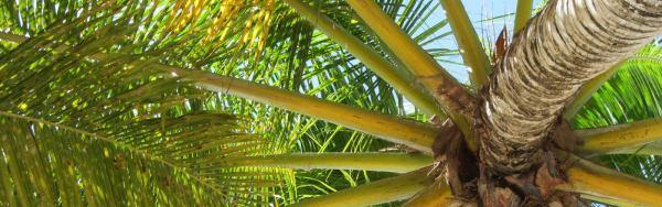 Palms in Varadero