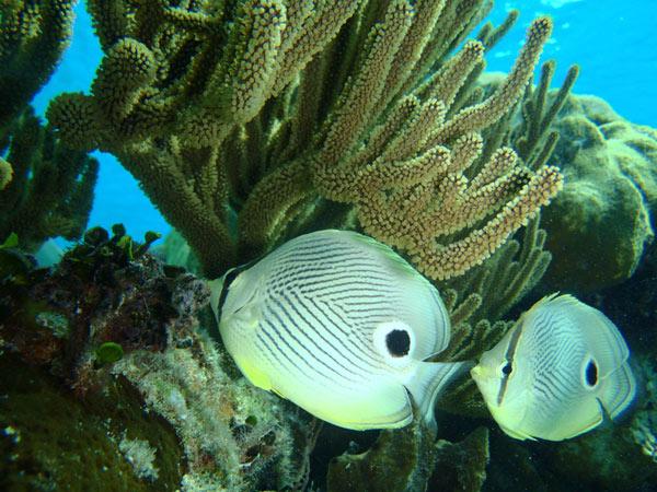 Raj nurkowania
